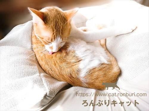 毛づくろいをしている猫