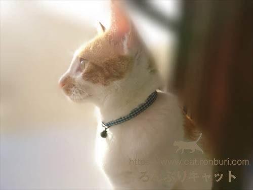 カッコいい猫の顔
