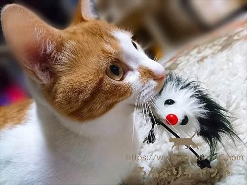 遊んでいる猫