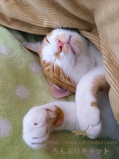 寝ている猫