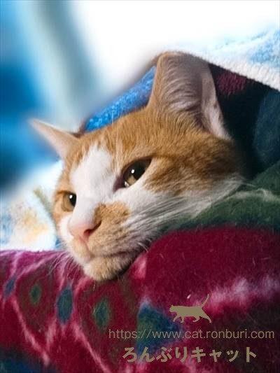 ホラーな猫の顔